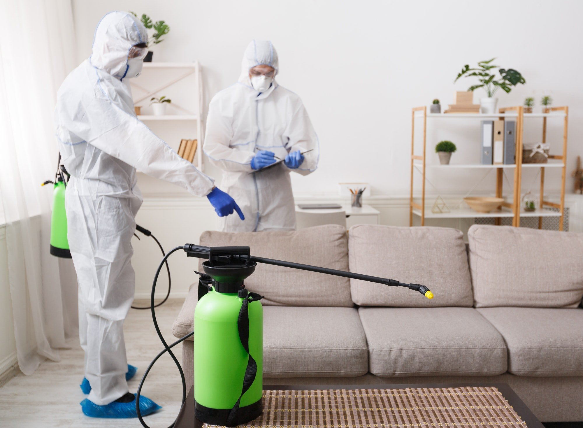 Cleaning company making treatment of sofas and surfaces